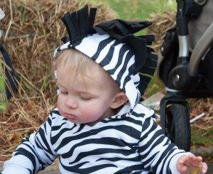 Austin the zebra